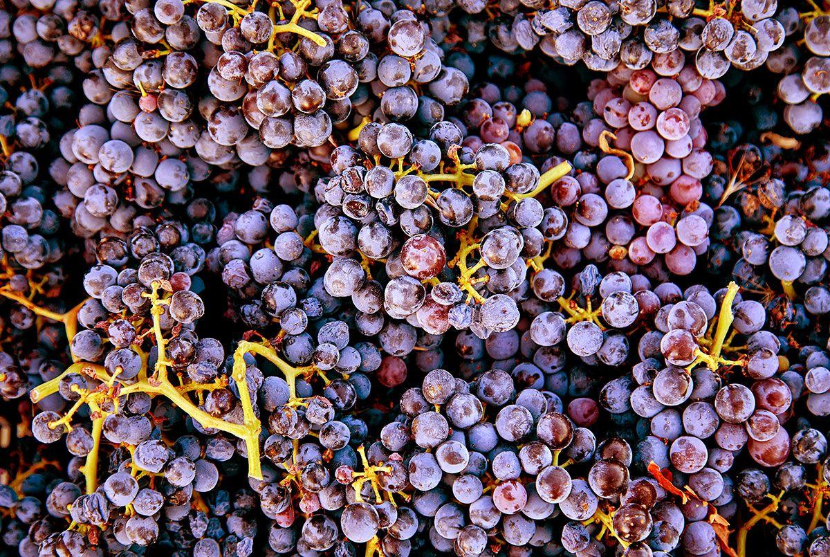 Pintan-Copas-Comunicacion-uvas