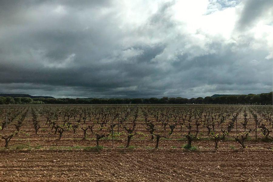 Abadia-Retuerta-Blog-Pintan-Copas-2
